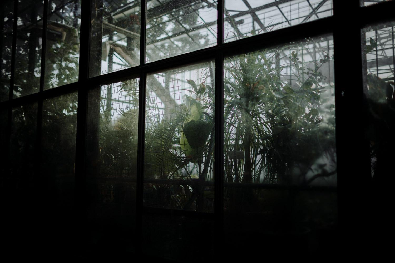 photographe mariage Lyon ,Parc de la tête d'or, Lyon, cactus, portrait, The Black Alchemy, succulantes, photographe Lyon, fauteuil en rotin, frida, serre